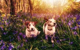 Dois cães, flores, natureza, raios de sol