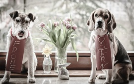 Preview wallpaper Two dogs, tulips, windowsill