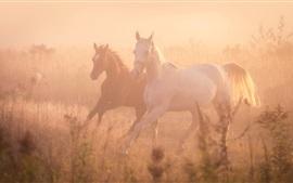 Две лошади бегут, туман, утро