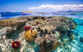 Bajo el agua, mar, coral