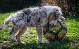 Влажный щенок и футбол, трава