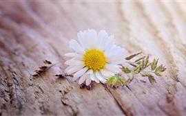 미리보기 배경 화면 흰색 데이지 꽃, 나무 보드