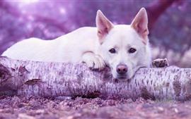 Cão branco da tristeza