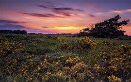 Wildflowers, clouds, sunset