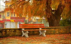 Willow, leaves, bench, autumn
