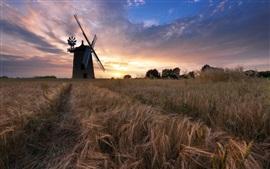 Moinho de vento, campo de trigo, nuvens, pôr do sol