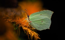 Yellow flower, butterfly, blurry background