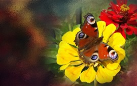 Preview wallpaper Yellow flower, butterfly, insect