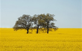 Preview wallpaper Yellow world, rapeseed flowers, trees
