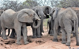 Preview wallpaper Africa, some elephants