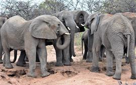 África, alguns elefantes