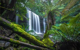 Preview wallpaper Australia, Tasmania, jungle, trees, waterfall, moss