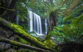 Austrália, tasmânia, selva, árvores, cachoeira, musgo