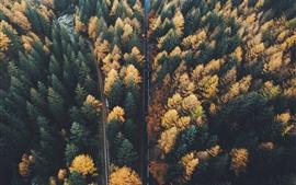 Outono, floresta, árvores, estradas, vista superior