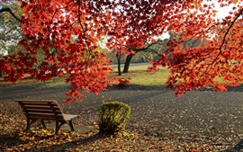 Autumn, park, red maple leaves