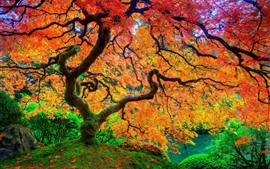Outono, árvore, folhas vermelhas, bela natureza