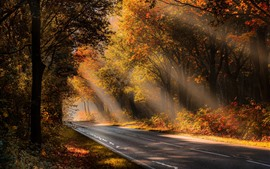Preview wallpaper Autumn, trees, fog, road, sunshine