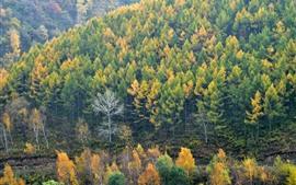 Autumn, trees, mountains, nature