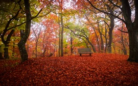 Preview wallpaper Autumn, trees, red leaves ground, bench, park