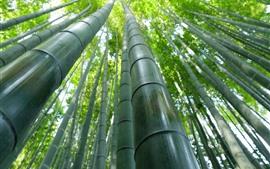 壁紙のプレビュー 竹林、緑、夏