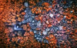 Aperçu fond d'écran Bel automne, forêt, vue de dessus