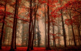 Beautiful autumn, trees, red leaves, fog, forest
