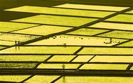 Красивое рисовое поле