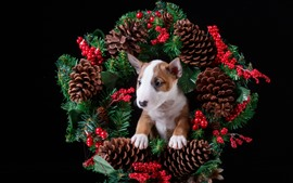 Preview wallpaper Berries, wreath, puppy
