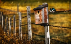 Preview wallpaper Birdhouse, fence, grass, two birds