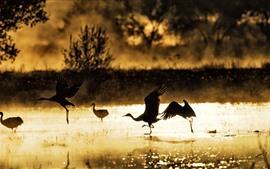 Птицы, озеро, утро, солнце