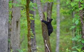 Filhote de urso preto subindo a árvore