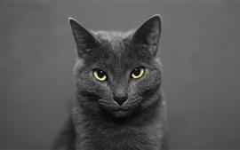 預覽桌布 黑貓正面圖,黃色眼睛,朦朧