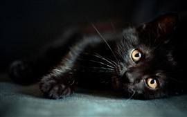 Preview wallpaper Black cat, yellow eyes
