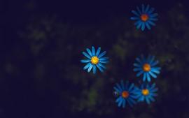 Голубые лепестки полевые цветы, темнота