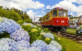Бразилия, площадь Капивари, поезд, гортензия