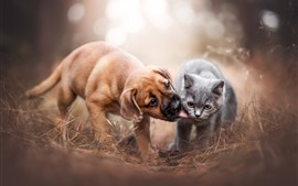 Brown dog and gray cat, friends