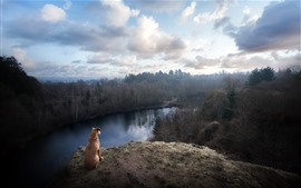 Brown dog, look, river, forest, fog