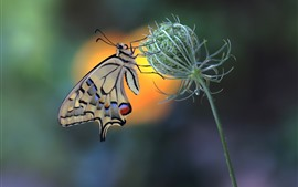 Preview wallpaper Butterfly, swallowtail, plants