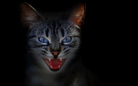 Preview wallpaper Cat, face, teeth, black background