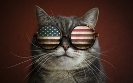 Preview wallpaper Cat, glasses, USA flag, funny animal
