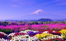 Colorful flowers, spring, Mount Fuji, Japan