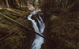 Creek, árboles, naturaleza