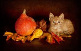 Preview wallpaper Cute kitten, maple leaves, pumpkin