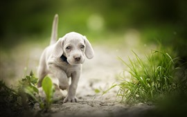Preview wallpaper Cute puppy walking, grass, bokeh