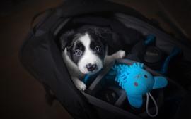 Cachorro e brinquedo azul