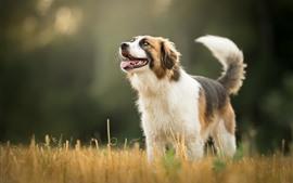 Собака, трава, боке