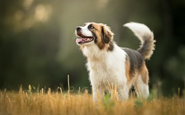 Cão, grama, bokeh