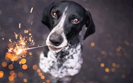 Preview wallpaper Dog play fireworks, sparks