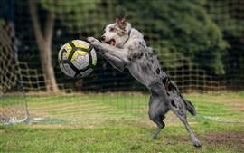 Preview wallpaper Dog play football, grass, funny animal