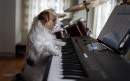 Preview wallpaper Dog play piano, funny animal